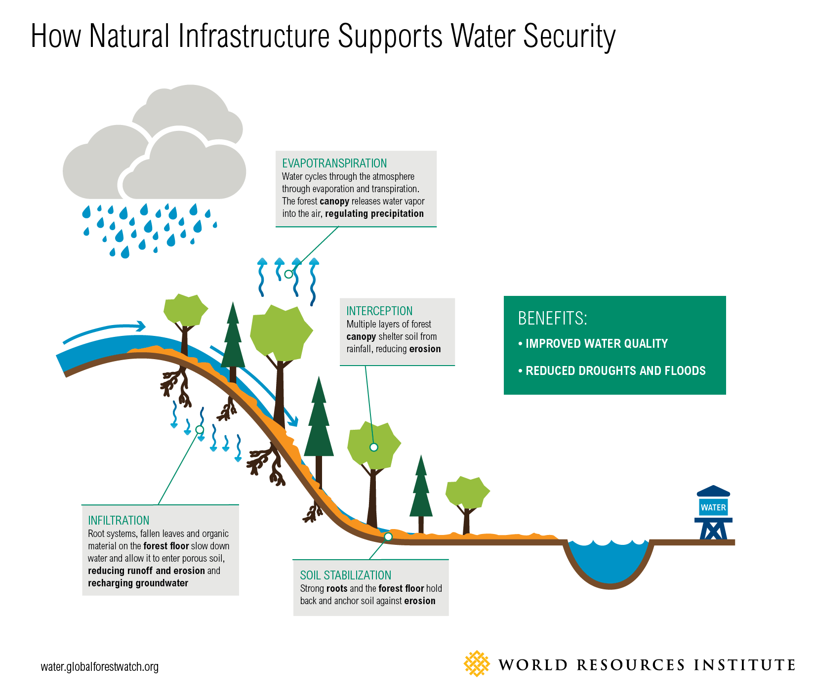 What Ways Does Nature Use To Prevent Erosion