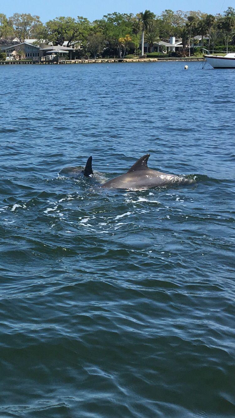 Dolphins jet ski rentals places in melbourne florida