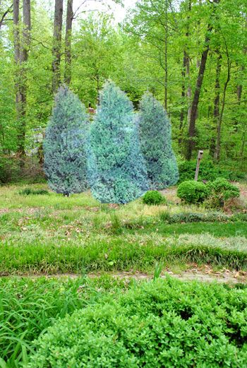 Planting A Few Leyland Cypress Trees For Added Privacy Cypress Trees Plants Young House Love