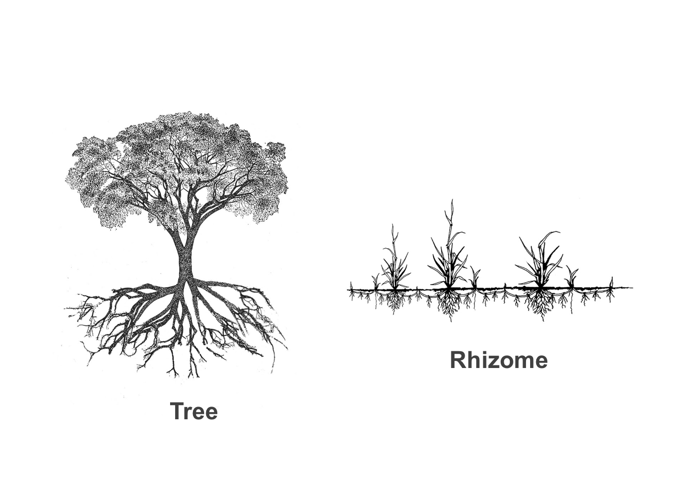 Rhizome Architecture Daniels Faculty Current And Former