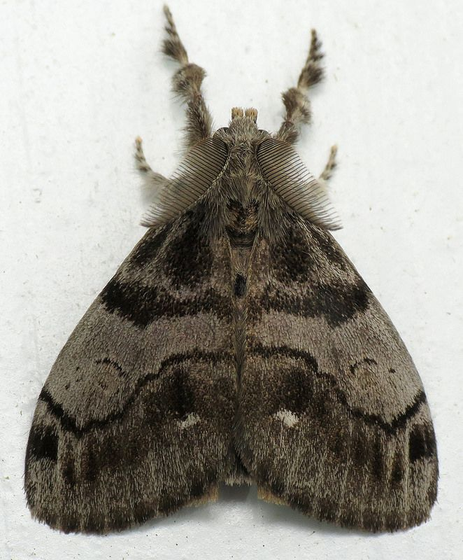 Bug Of The Day Bugs Moth Butterfly