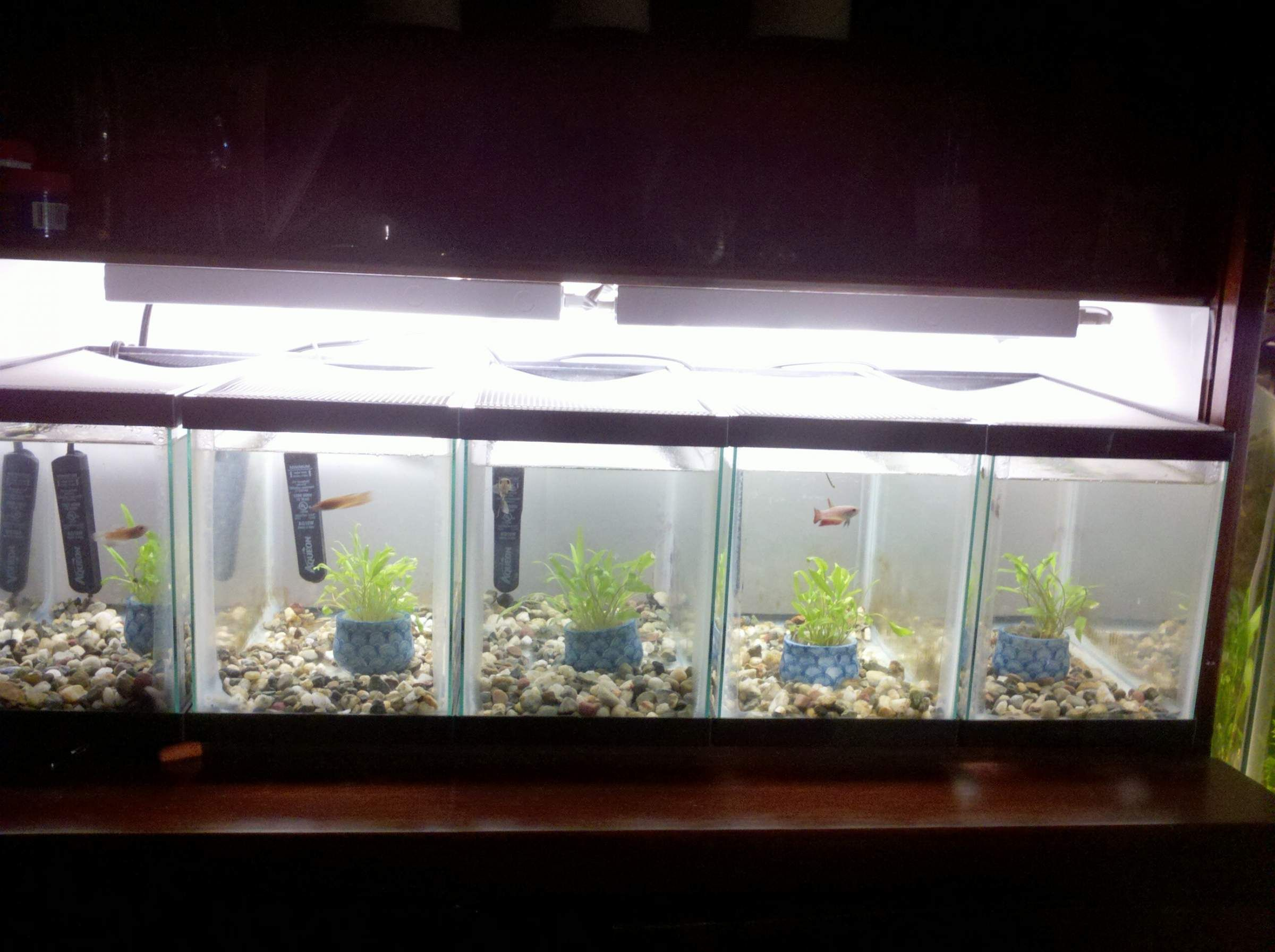 Male betta tanks with dividers google zoeken my pets for Fish tank divider