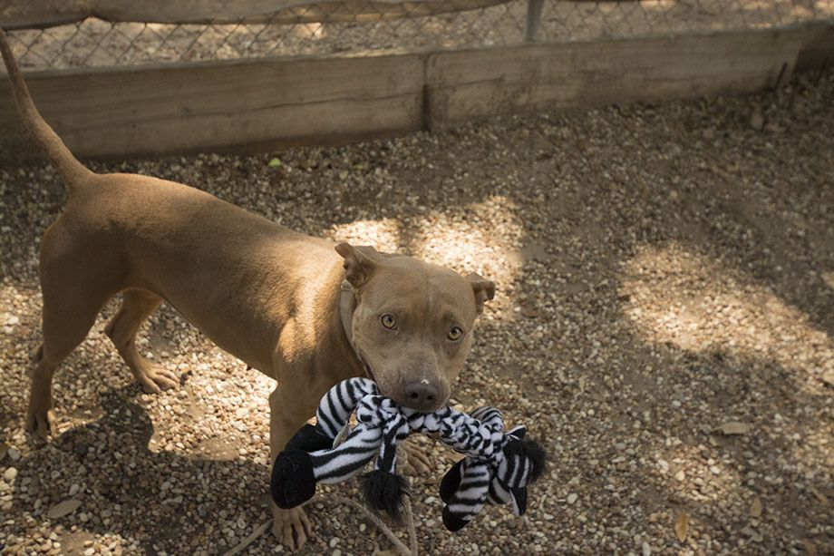 17++ Animal shelter drop off ideas