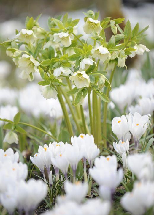 White Garden ⊰✿