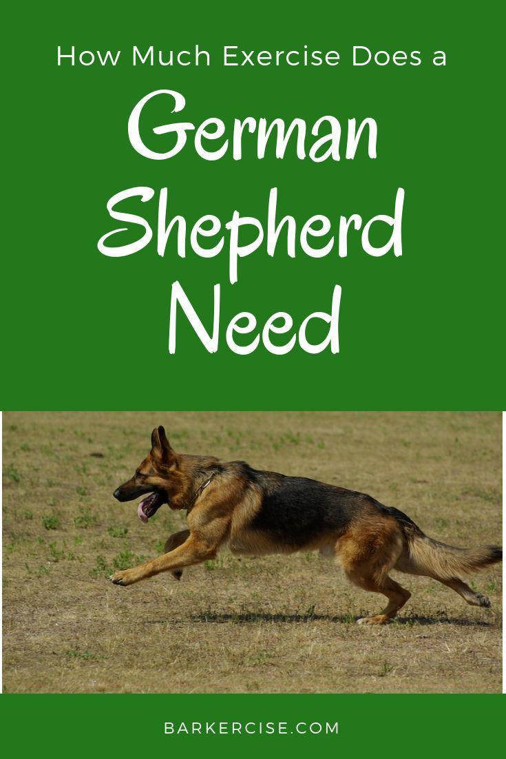 How Much Is A German Shepherd Puppy In The Philippines References