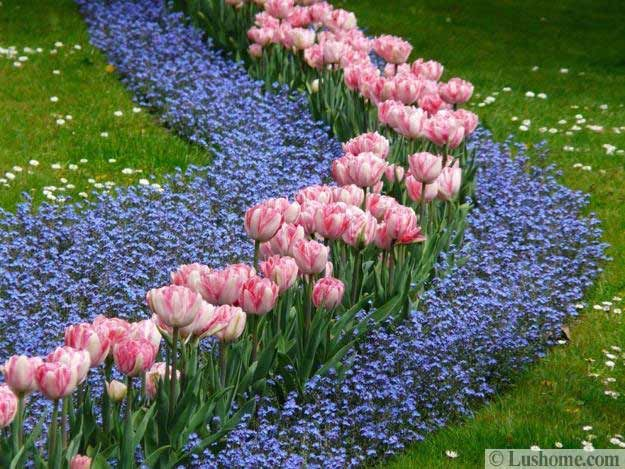 Spring Garden Ideas garden ideas border ideas plant combinations bulb combinations flowerbeds ideas Ideas For Planting Tulips To Create Dazzling Accents And Borders In Spring Gardens