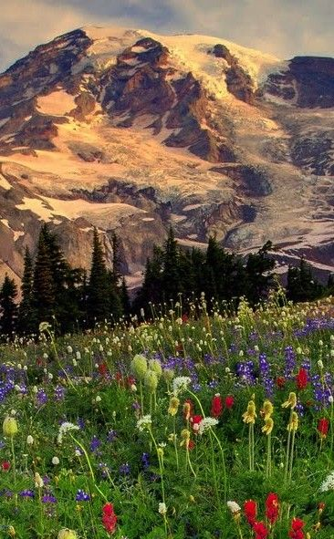 Paradise at Mount Rainier | Travel | Vacation Ideas | Road Trip | Places to Visit | Ashford | WA | Photo Op | Folk Art | Natural Feature | Hiking Area | Roadside Attraction