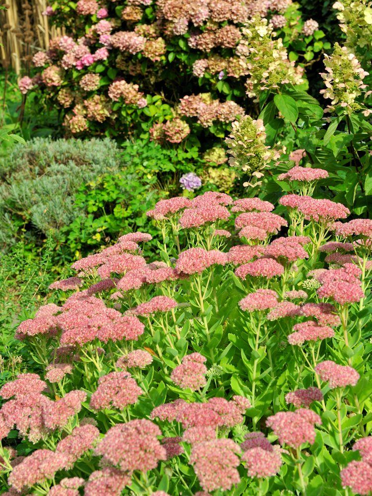7 Popular Ground Covers To Enhance Any Yard Hillside Landscaping