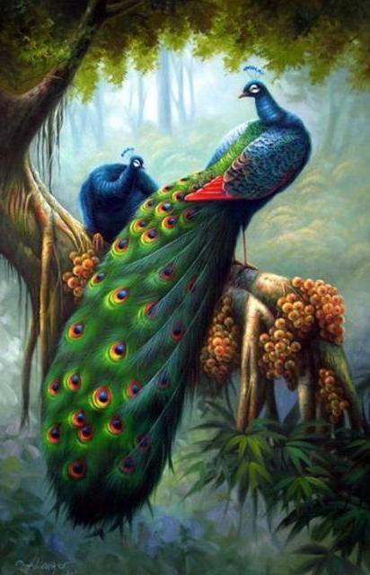 райские птицы картинки - Поиск в Google   Arte pavo real ...