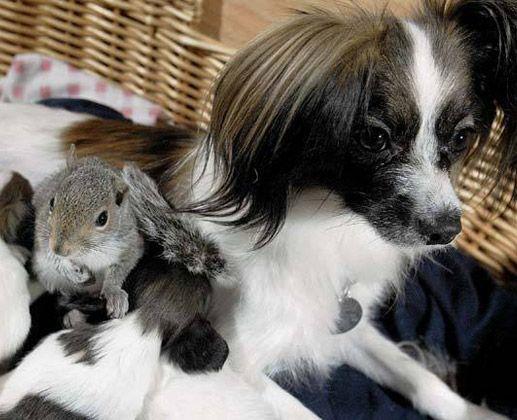 Squirrel frind!