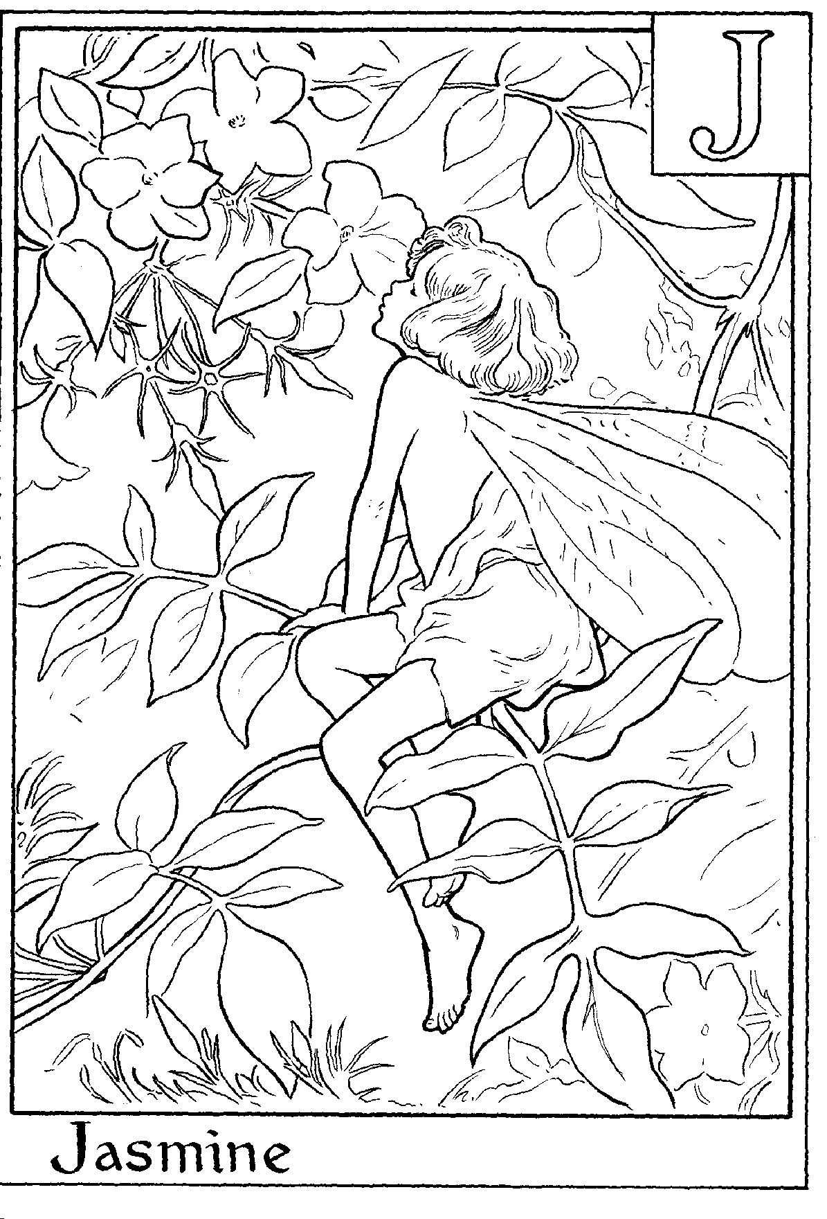 Jasmine flower coloring pages for Coloring pages jasmine
