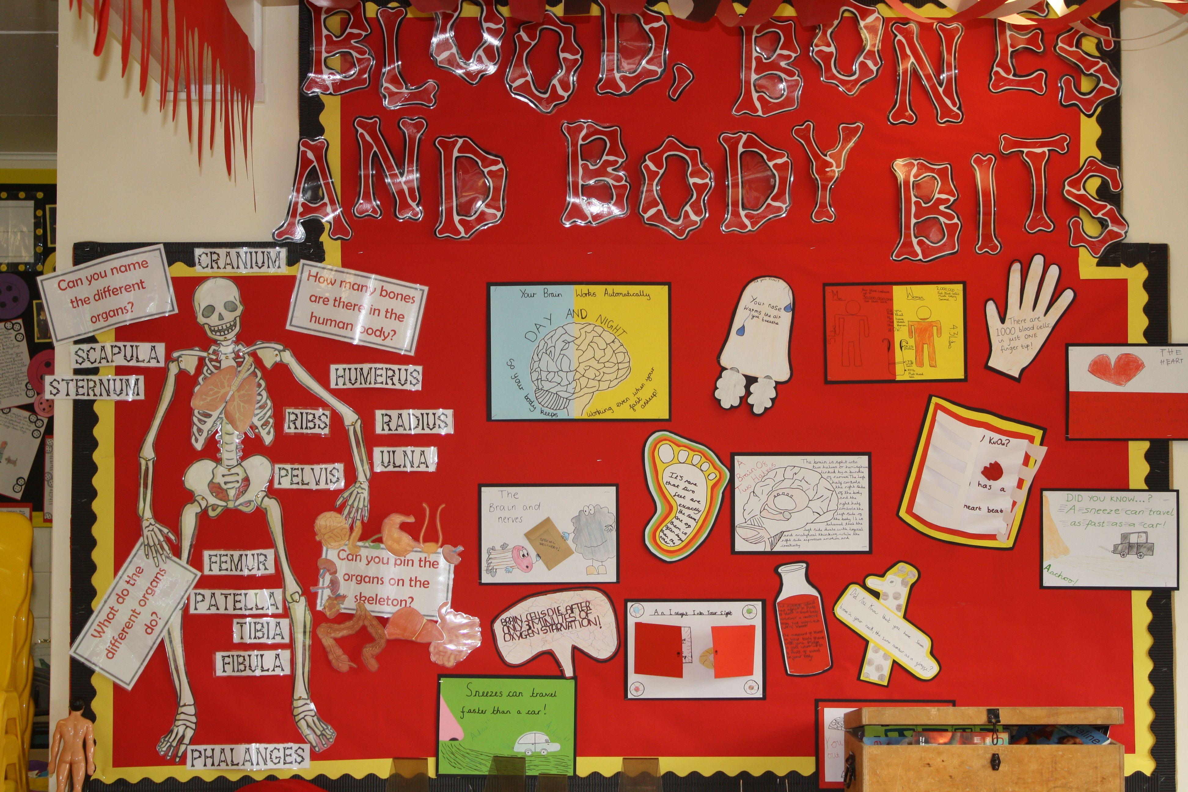 Year 6 Blood Bones And Body Bits Human Anatomy