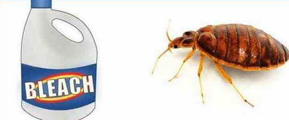 does bleach kill bed bugs D