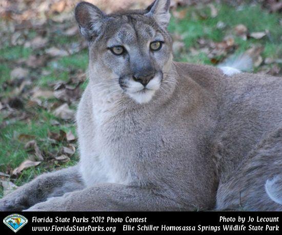 Ellie Schiller Homosassa Springs Wildlife State Park Is