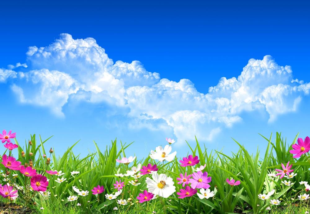 La Primavera Astronomica E Arrivata Dalle 4 50 Di Oggi Il Sole Culmina Allo Zenit All Equatore Fiori Primaverili Fiori Estivi Piantare Fiori