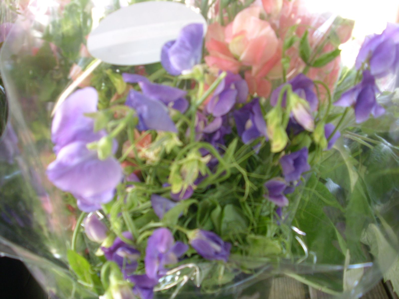 Dainty sweet peas, all dressed up for market
