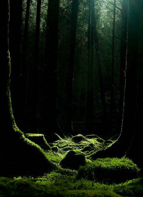 Feather & Moss Curiosities, chasingthegreenfaerie: Moss & Trees by...