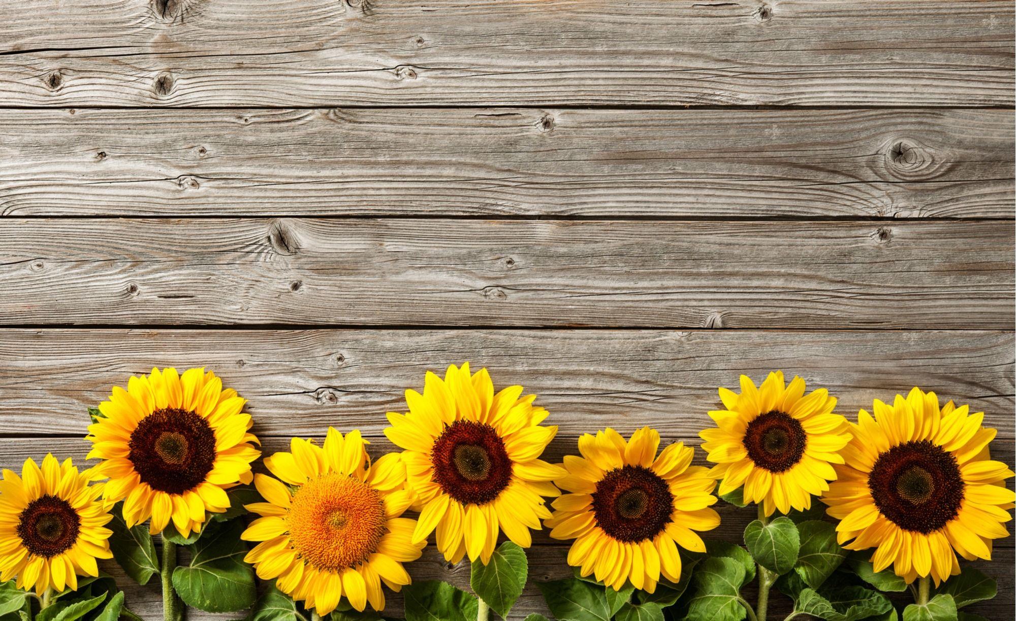 Grow Sunflowers Sunflowers Background Sunflower Wallpaper Facebook Cover Photos Vintage