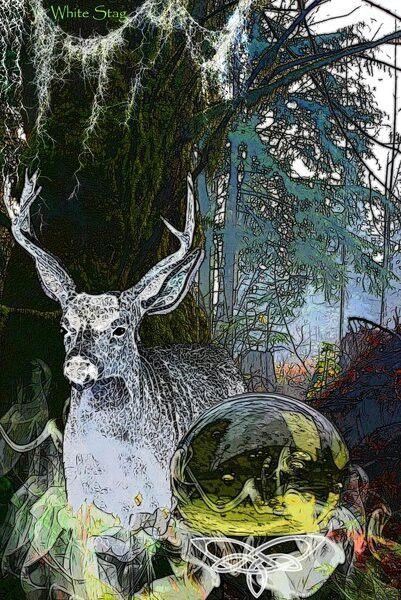 Celtic White Stag Celtic 1 Pinterest Artwork