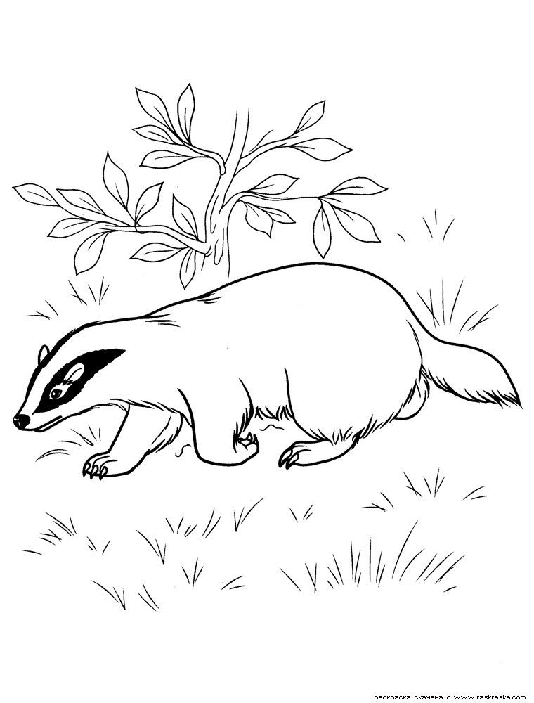 Raskraski Dikie I Domashnie Zhivotnye Pticy Ryby Stranica 10 Coloring Pages Forest Animals Clip Art