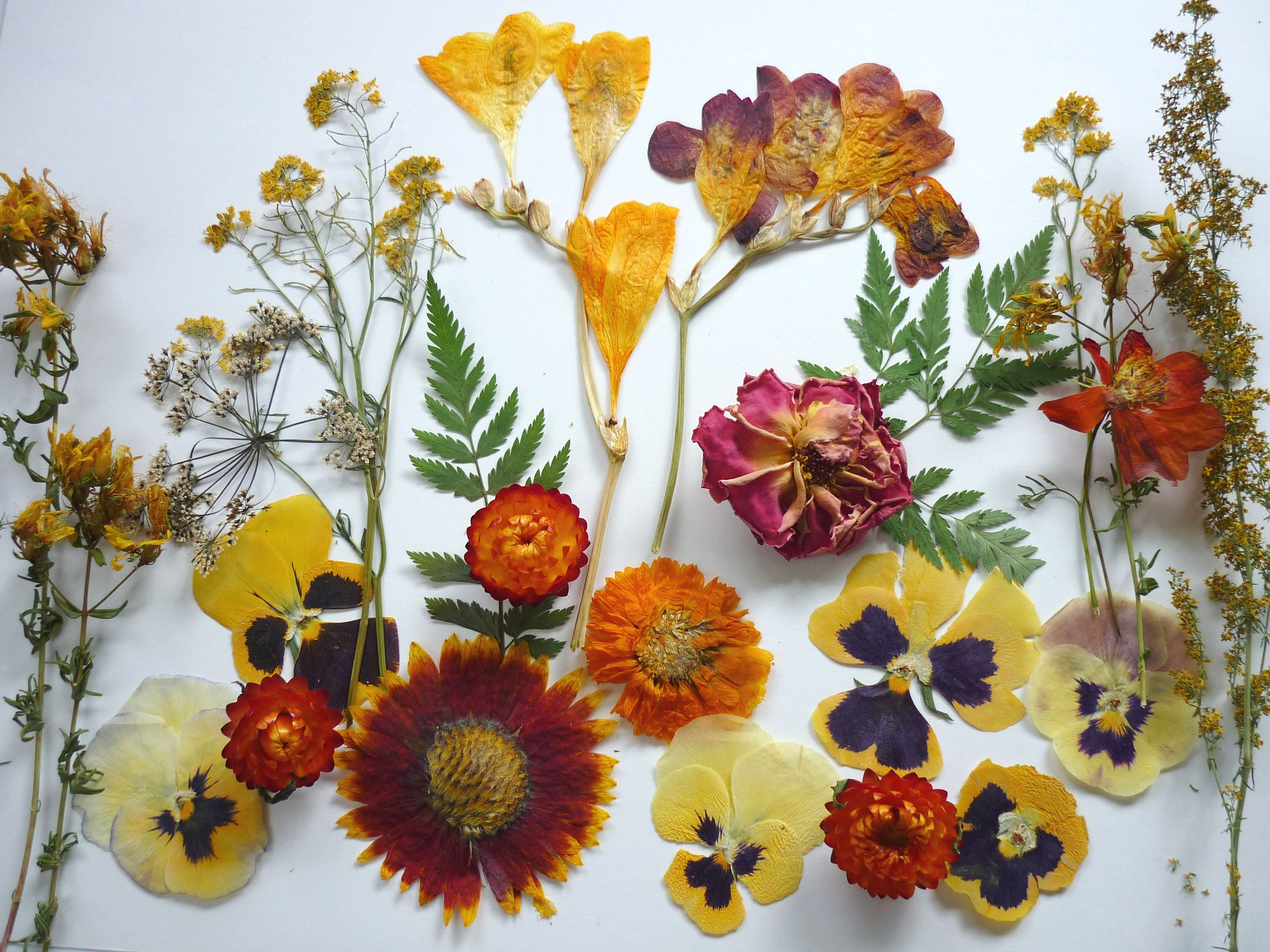 A Pack  Of Dried  Flower   Botanical  Dried Flowers