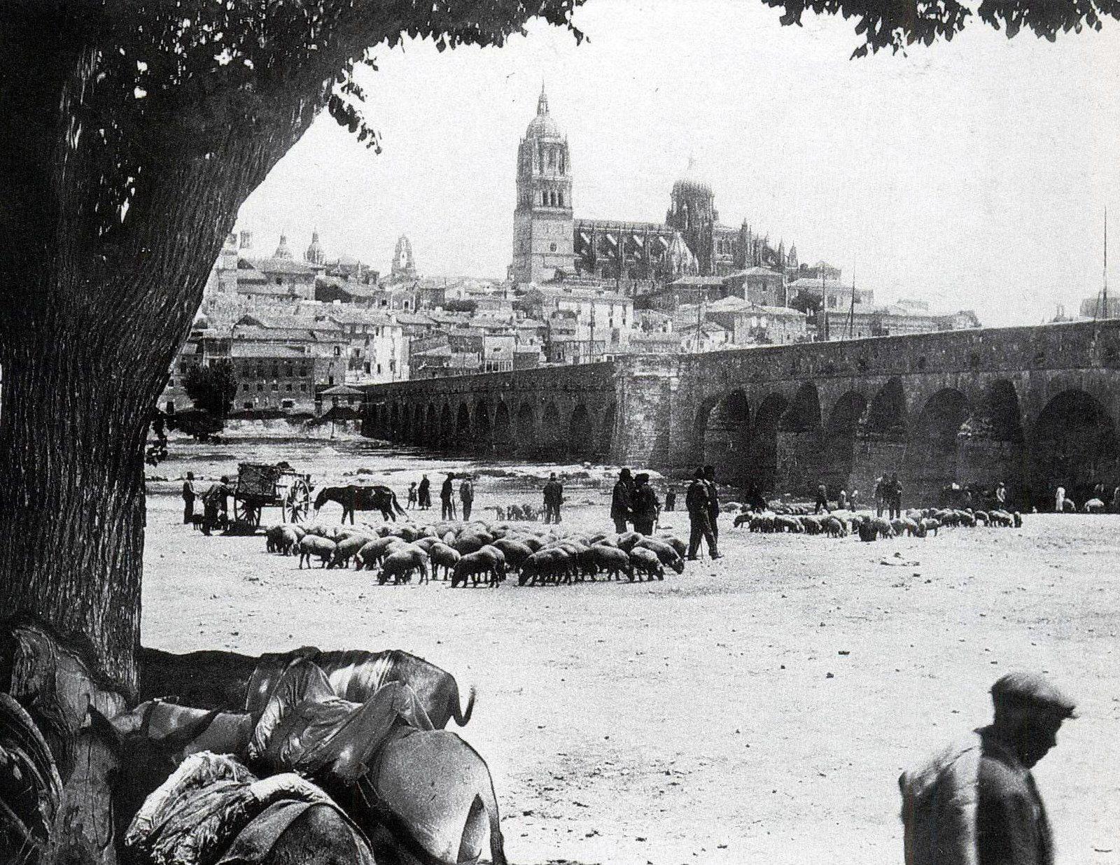 Vista de Salamanca y el Puente Romano, bajo un árbol un dia de feria de ganado, Candido Ansede