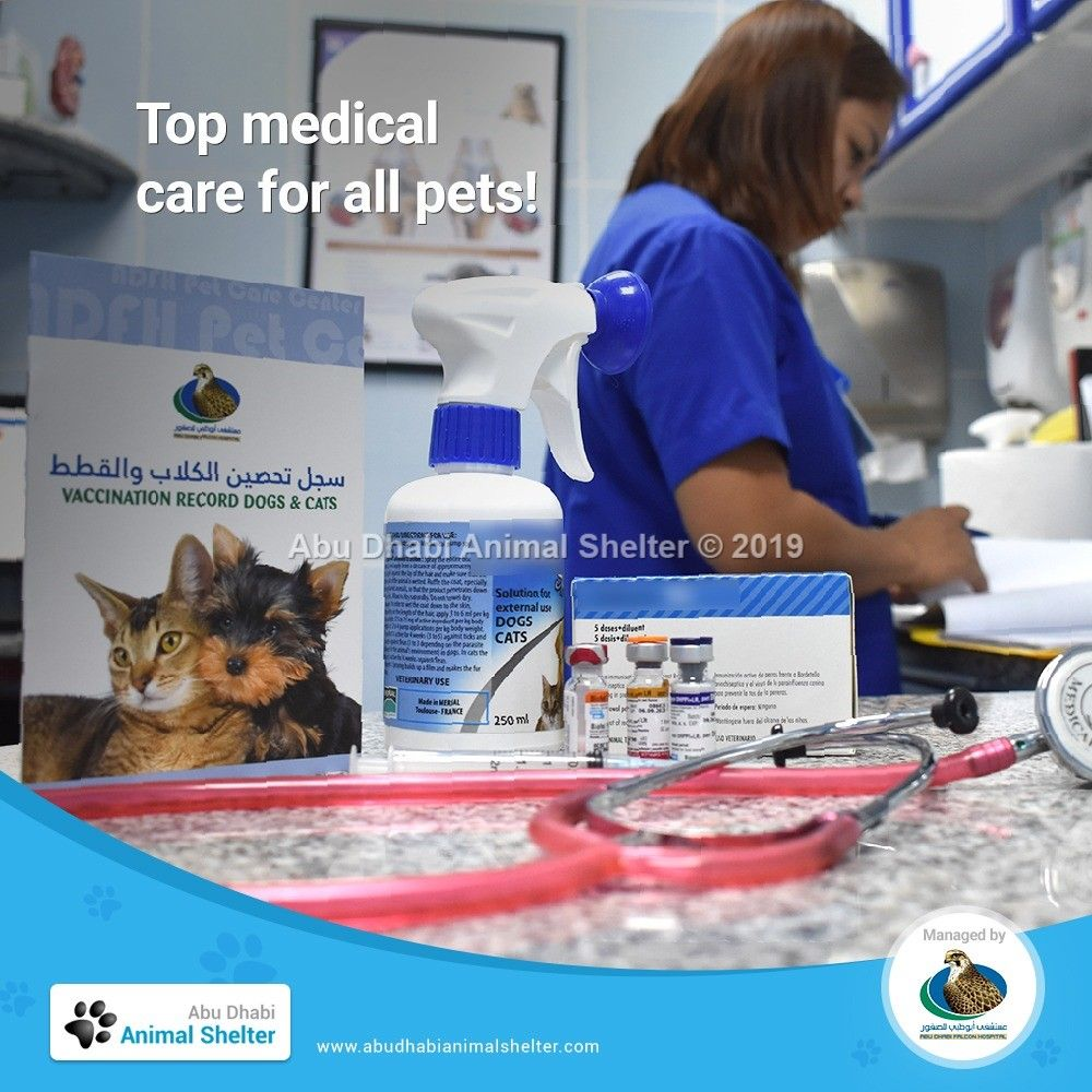 All Pets At Adas Are Provided With Top Quality Medical Care To Prepare Them For Their New And Forever Homes Adas Animalshelter Adoptdontshop Animal Shelter