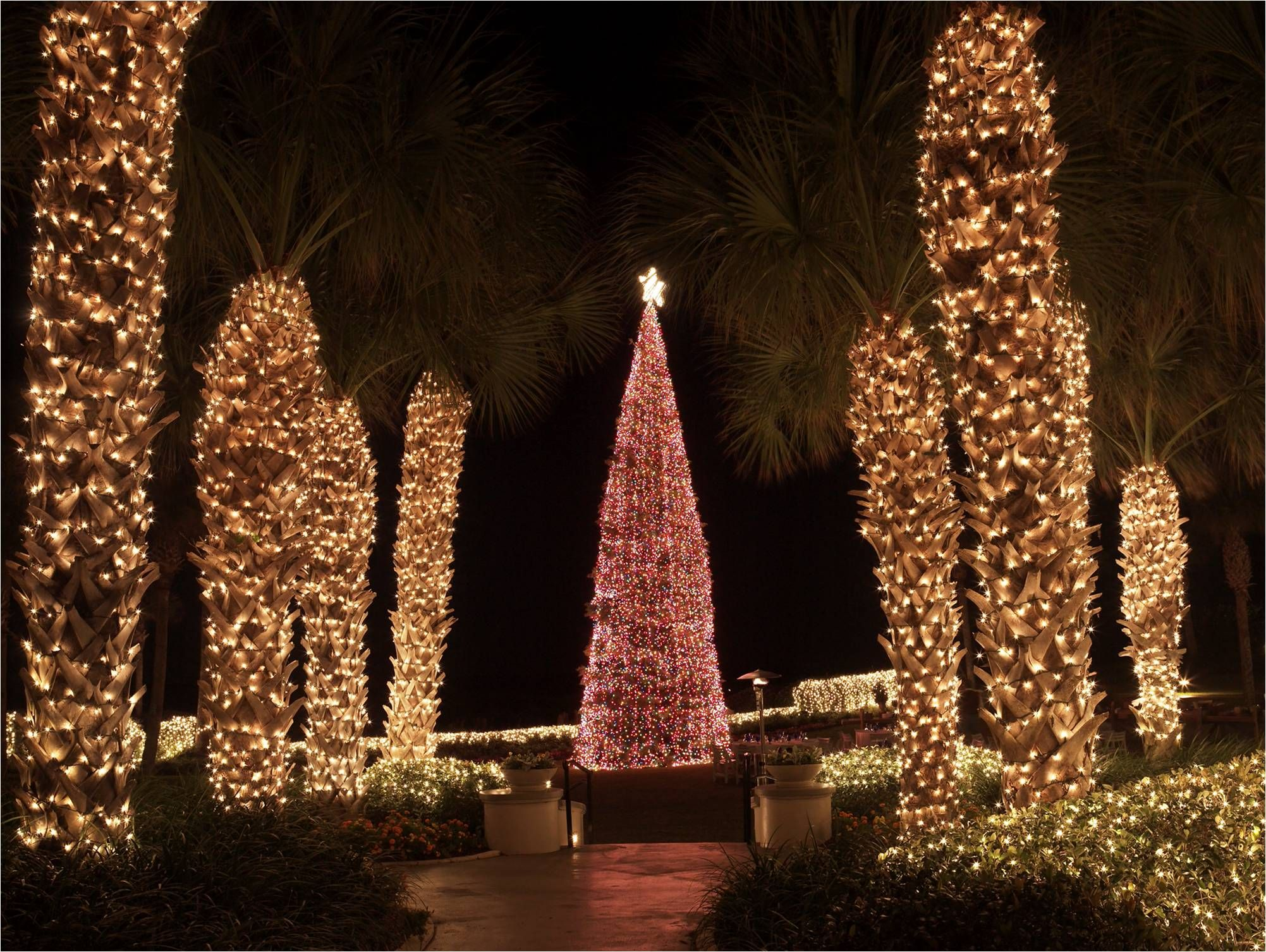 Amelia island christmas tree lighting at amelia island plantation - Christmas Tree Lighting At The Ritz Carlton Amelia Island