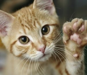 To raise a happy and healthy cat, you need a great plan. The best ones include communicating with everyone in your family about the basic expectations you have of your cat and the goals you hope to achieve.