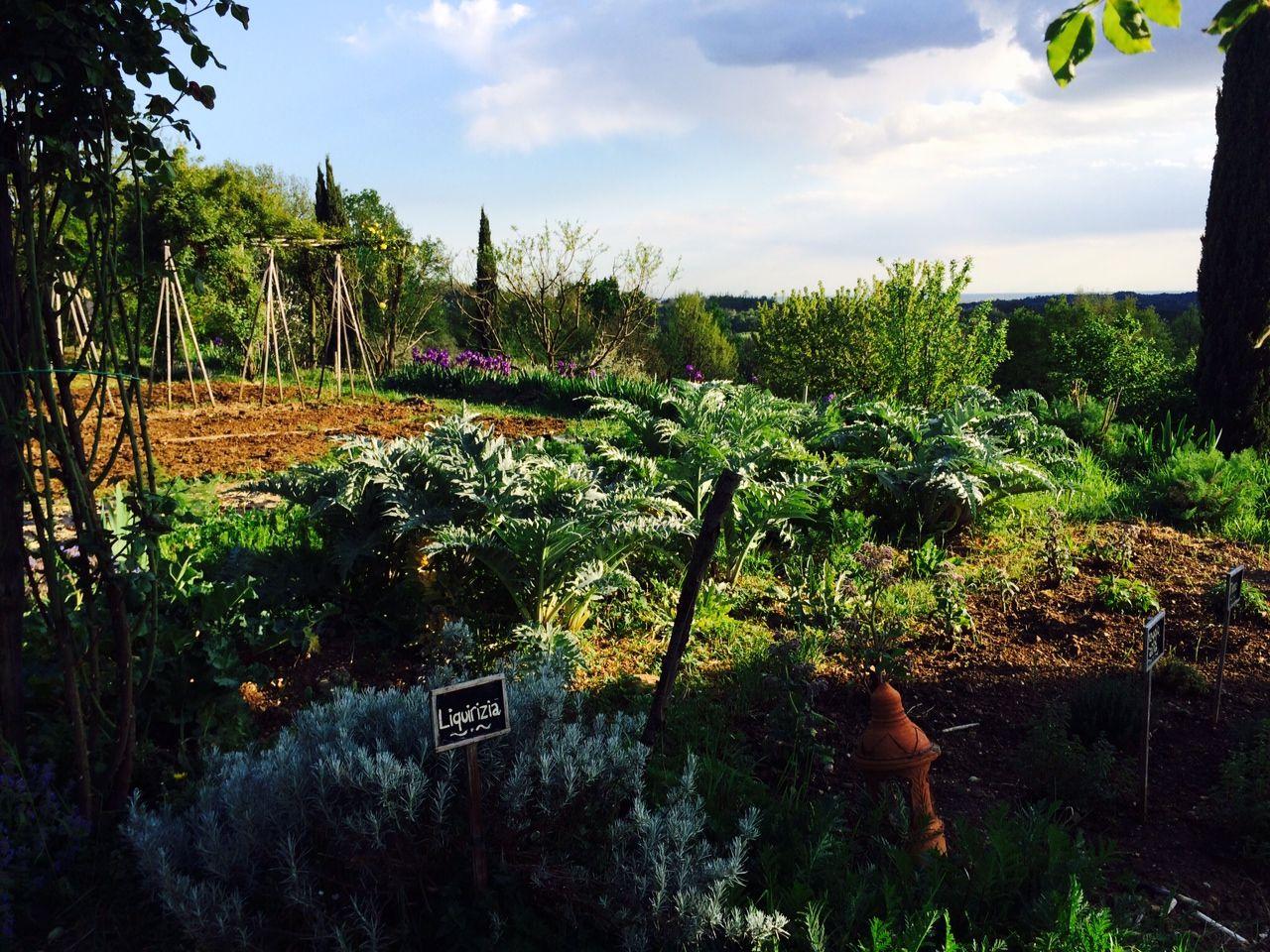 Fiori Da Piantare Nell Orto con la primavera, sono iniziati i lavori nell'orto, il