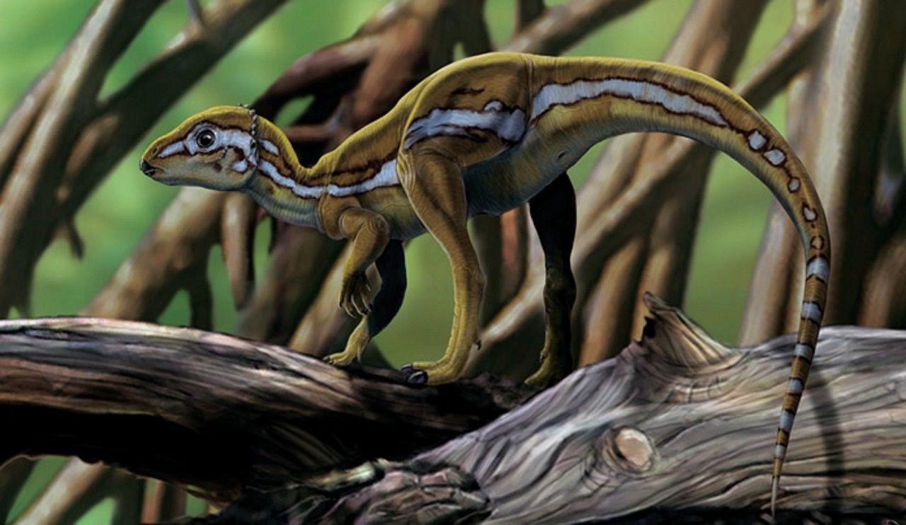 Micropachycephalosaurus hongtuyanensis (dinosaurio