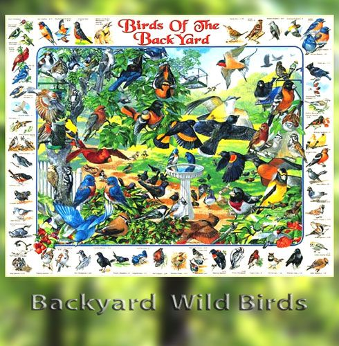 Popular Backyard Wild Birds Of N A Jigsaw Puzzle: Backyard Birds Jigsaw Puzzle $15.95