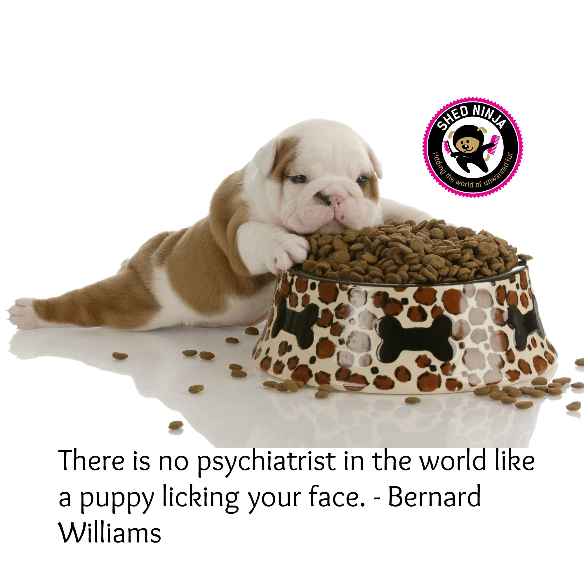 There Is No Psychiatrist In The World Like A Puppy Licking Your