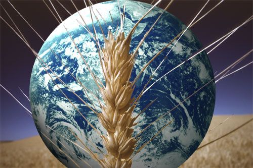 003 organic farming yields up to 80 percent more food on