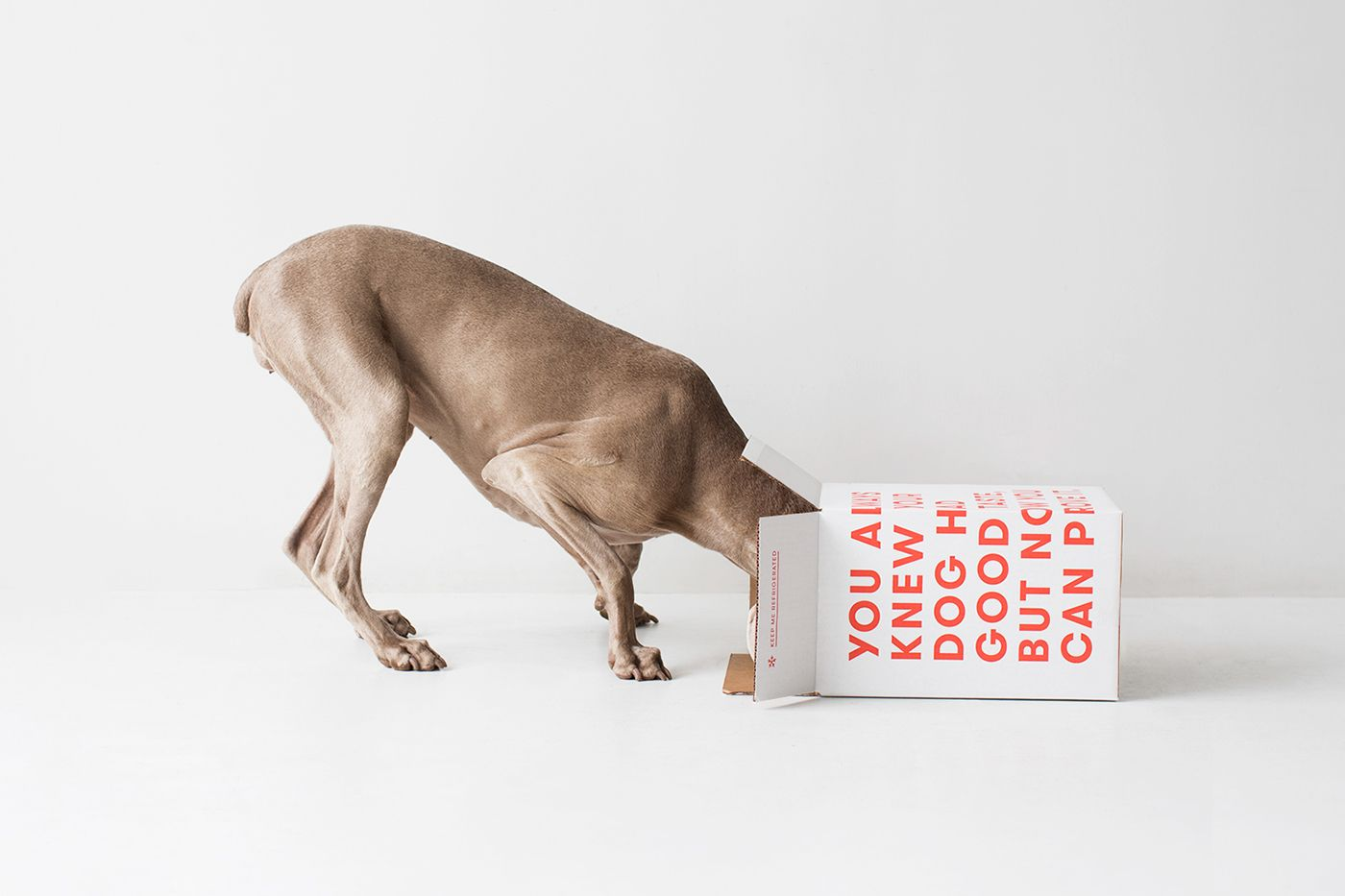 Ollie on Behance Ad creative, Dog food delivery, Identity