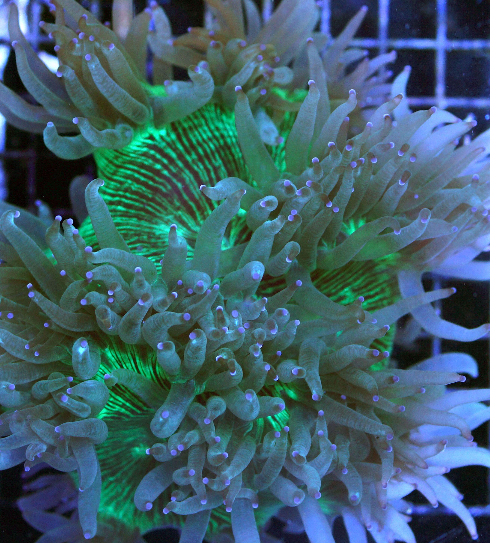 4f49816ebc4c3798e5975f416f04b3b1 Incroyable De Aquarium Deco Des Idées