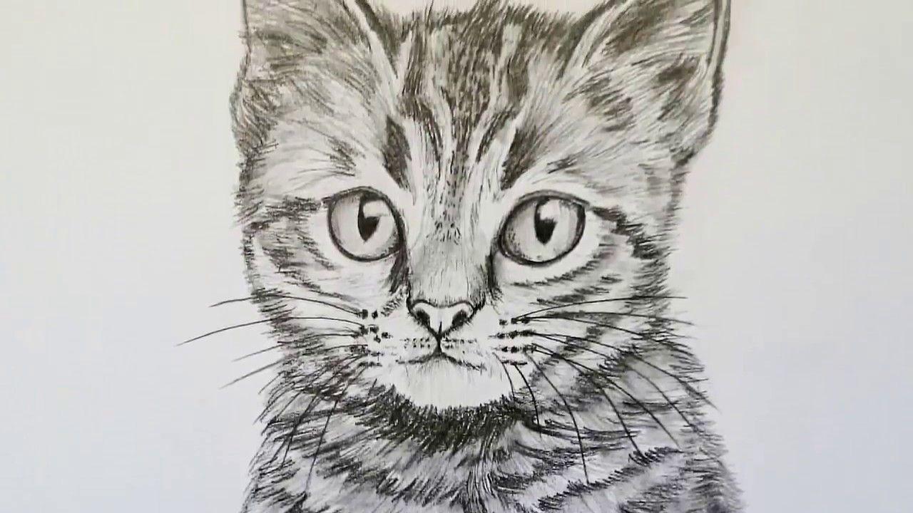 Katze Zeichnen Lernen Fur Anfanger Tiere Zeichnen Tiere
