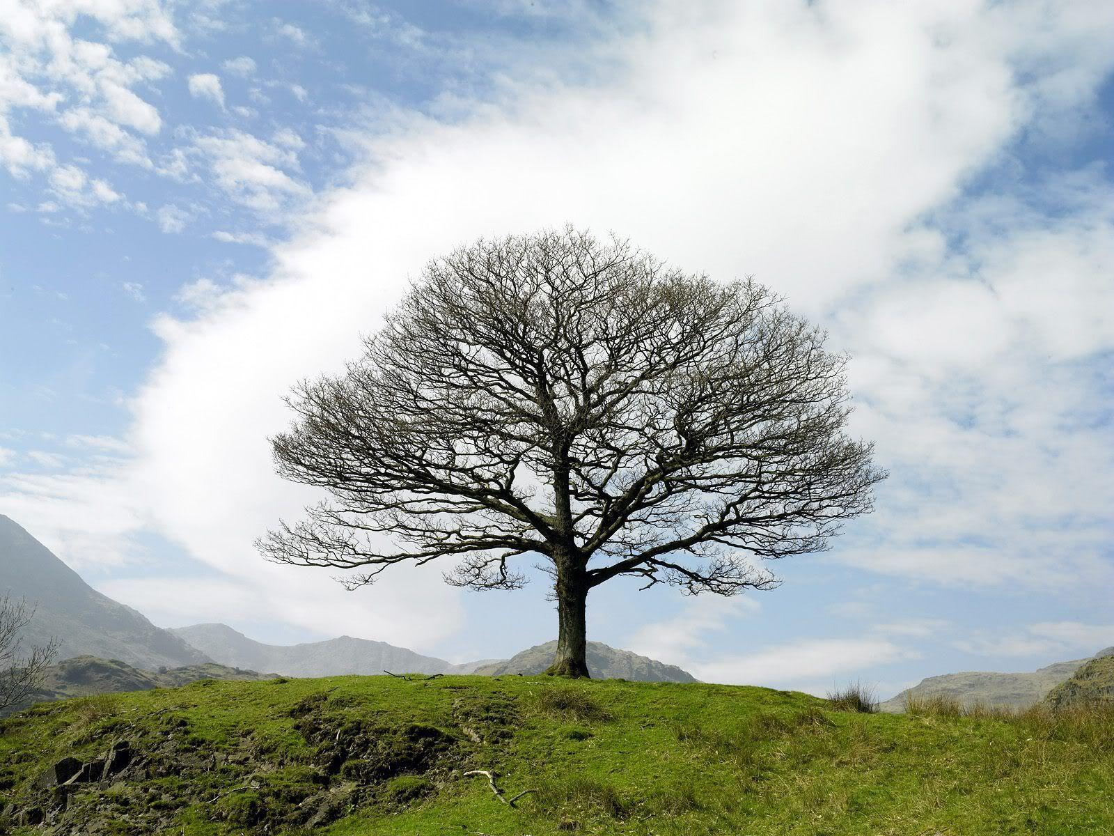 trees photo: Trees SingleTreeLakeDistrictNearLittleLan.jpg