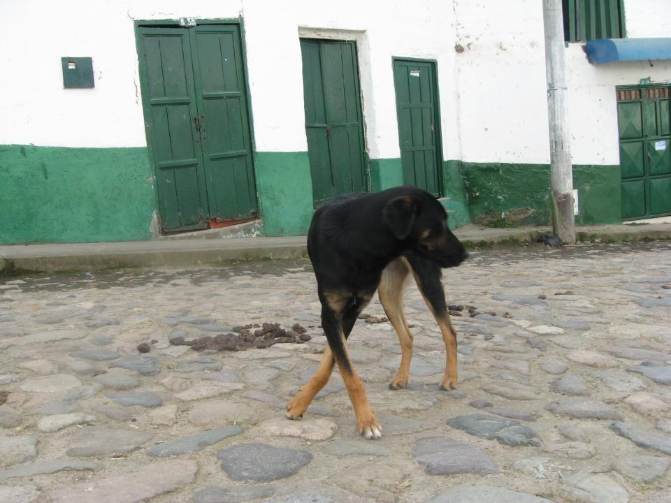 San Agustín - Huila - Colombia