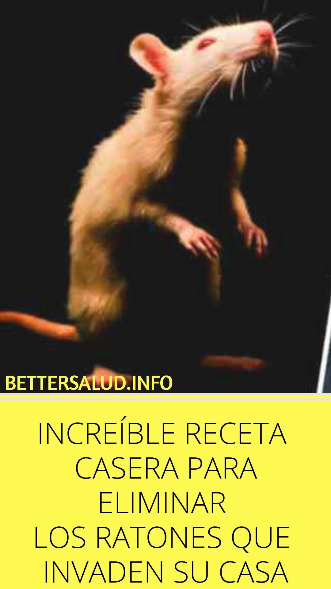 Como Acabar Con Las Ratas En El Campo Increible Receta Casera Para Eliminar Los Ratones Que Invaden Su