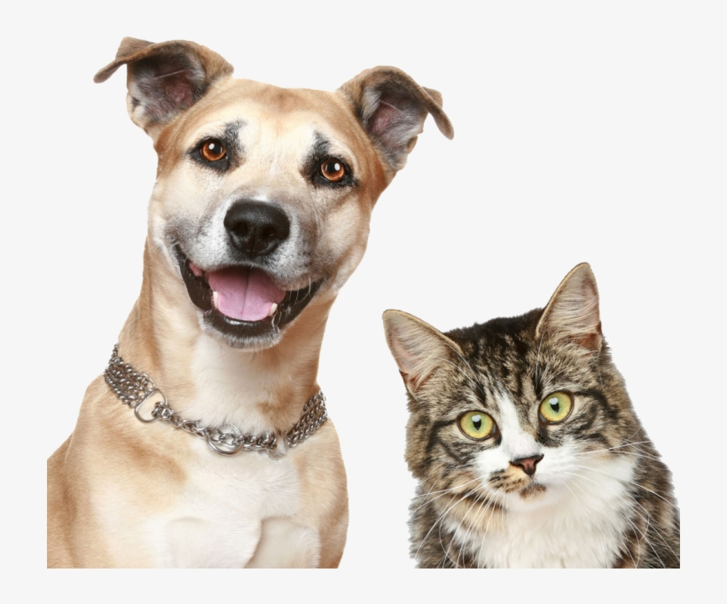 Download Dog And Cat Real Cat And Dog Png Image For Free Search More Creative Png Resources With No Backgrounds On Seekpng Pets Animals Dog Cat