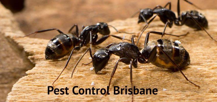 Pestend Brisbane boasts of its certification in Pest