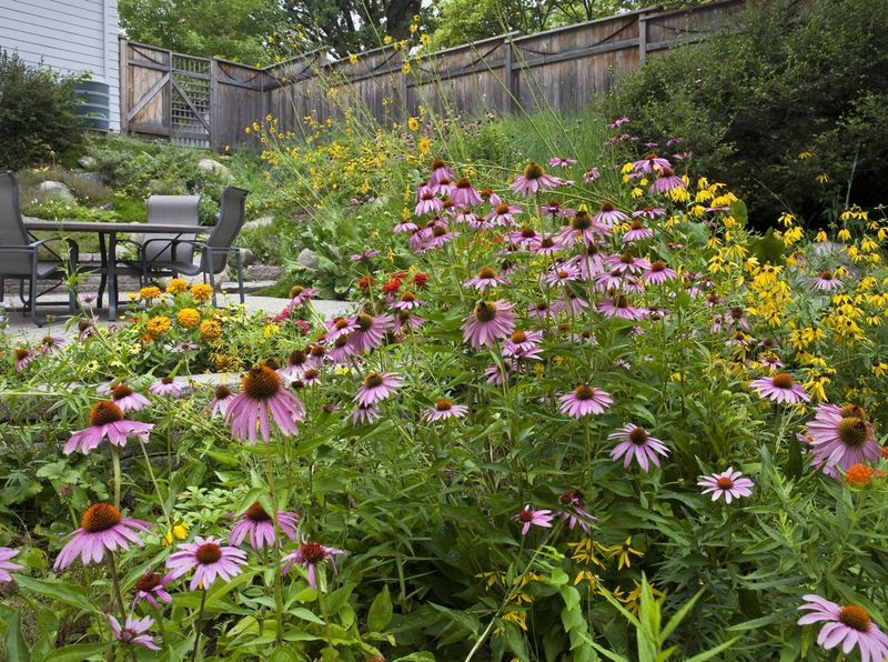 Americans Unsustainable Lawns And Lawn Care Damage Our Waterways And Our Neighborhood Ecosystems This Website Prov Prairie Garden Mow Yard Garden Inspiration