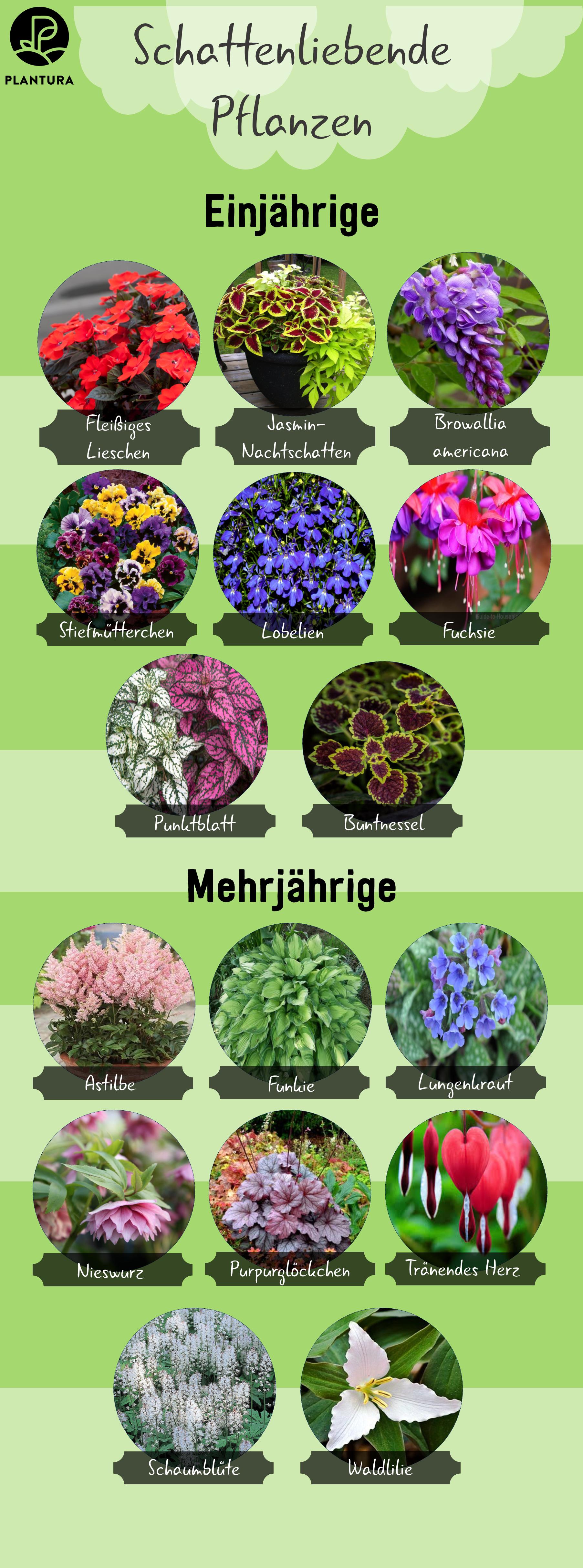 Pflanzen für den Schatten #orchideenschneiden