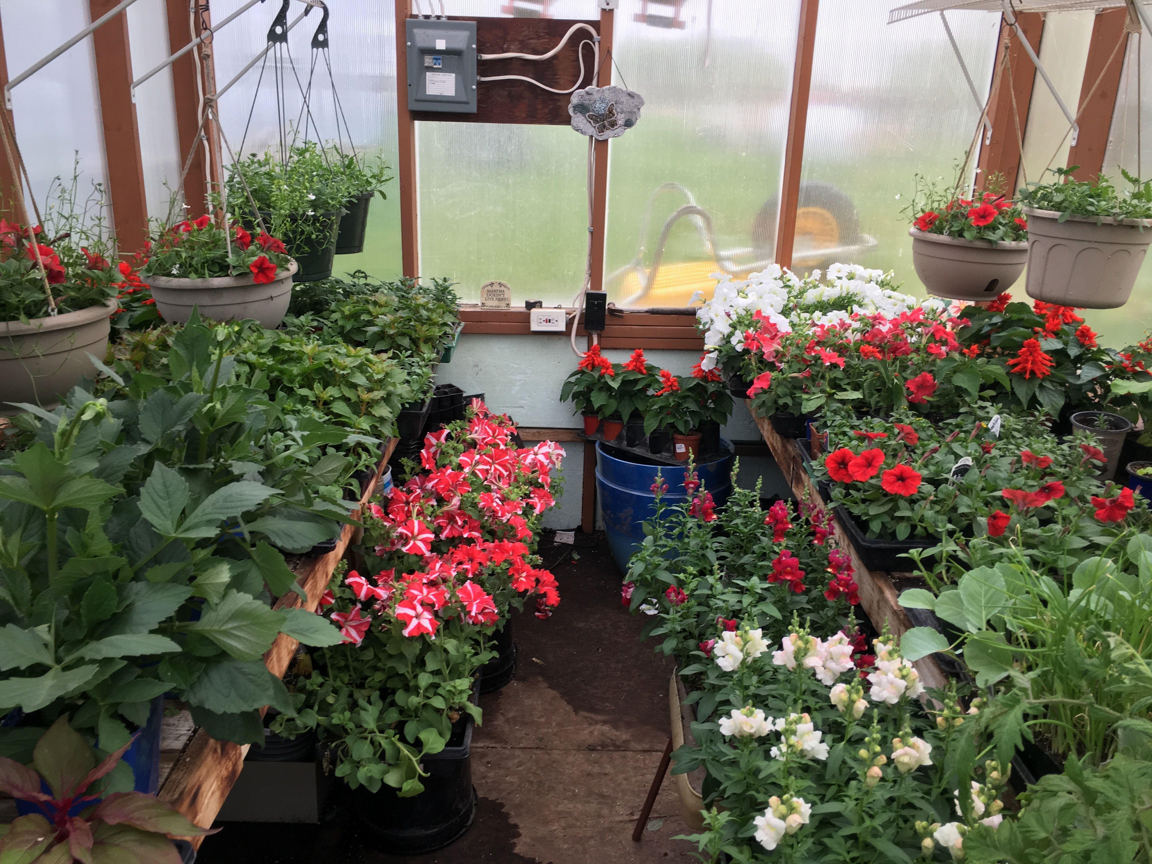 Backyard greenhouse growing plants indoors backyard