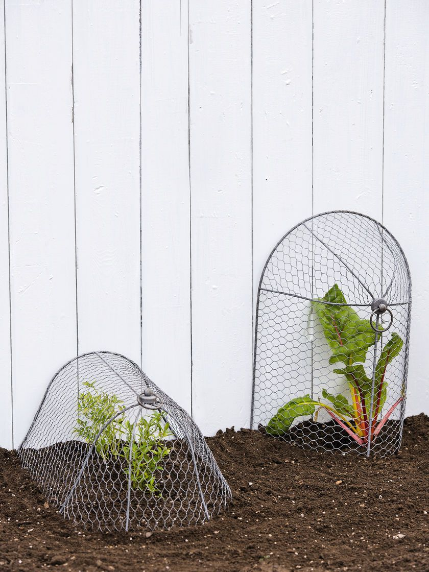 Chicken Wire Cloche Plant Protector, 3-in-1 | Gardeners.com Clever ...