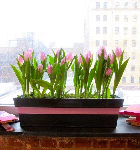 Indoor Window Box | Window Boxes | Pinterest | Indoor Window Boxes, Window  And Gardens