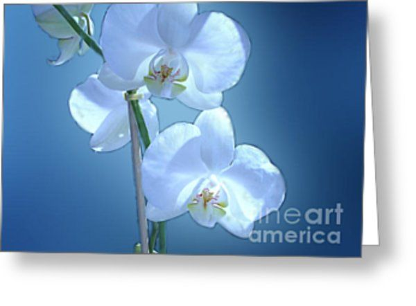 Twilight Orchid Greeting Card by Joan-Violet Stretch