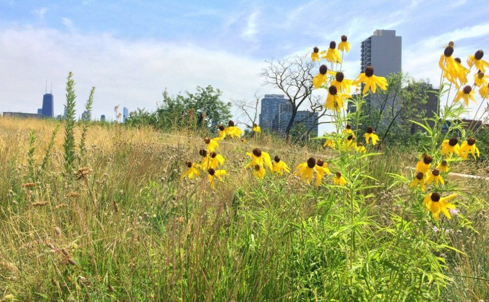 Green roofs grow up Creating native prairies in city