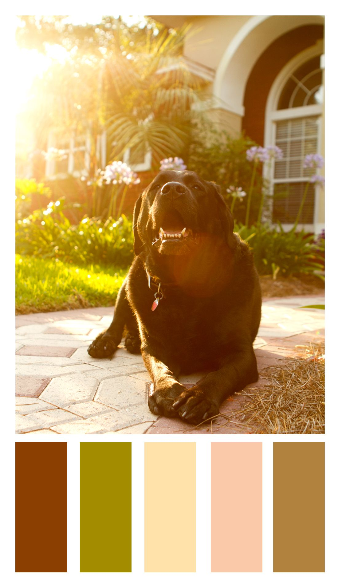 Color Palette For Beckham The Labrador